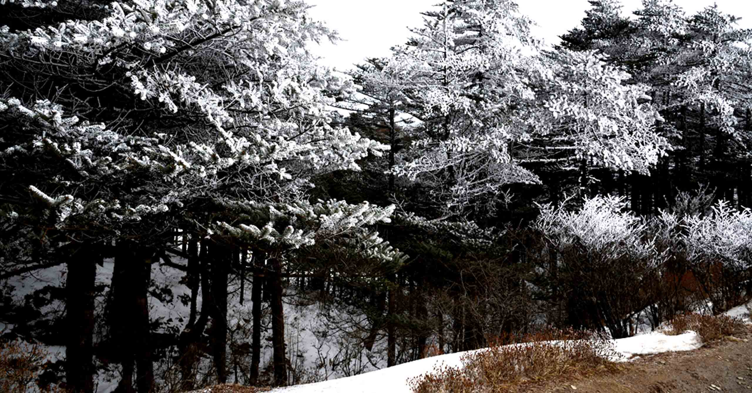 A magical trail to winter wonderland