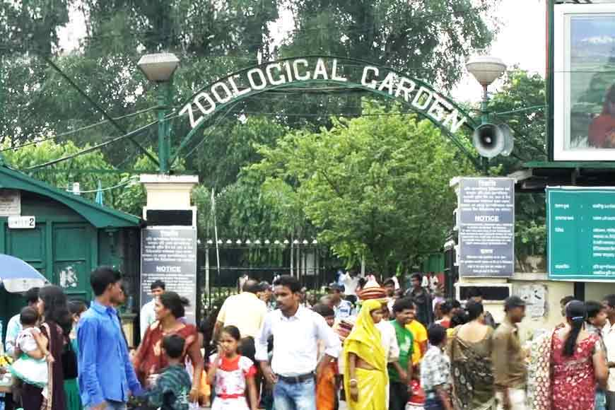 Alipore Zoo invents new technique to lure animals for Corona tests