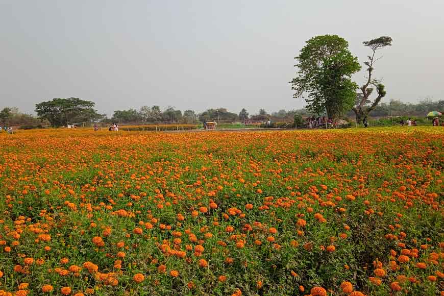 "Bengal's flower village ""Khirai"" is generating alternate employment for farmers"