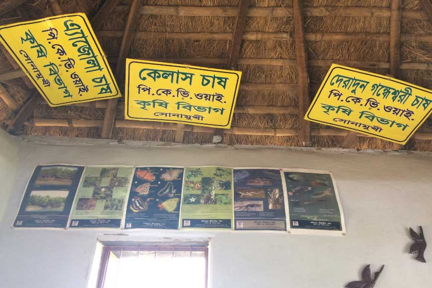 How cluster farmers of Bankura are reviving lost varieties of Bengal paddy