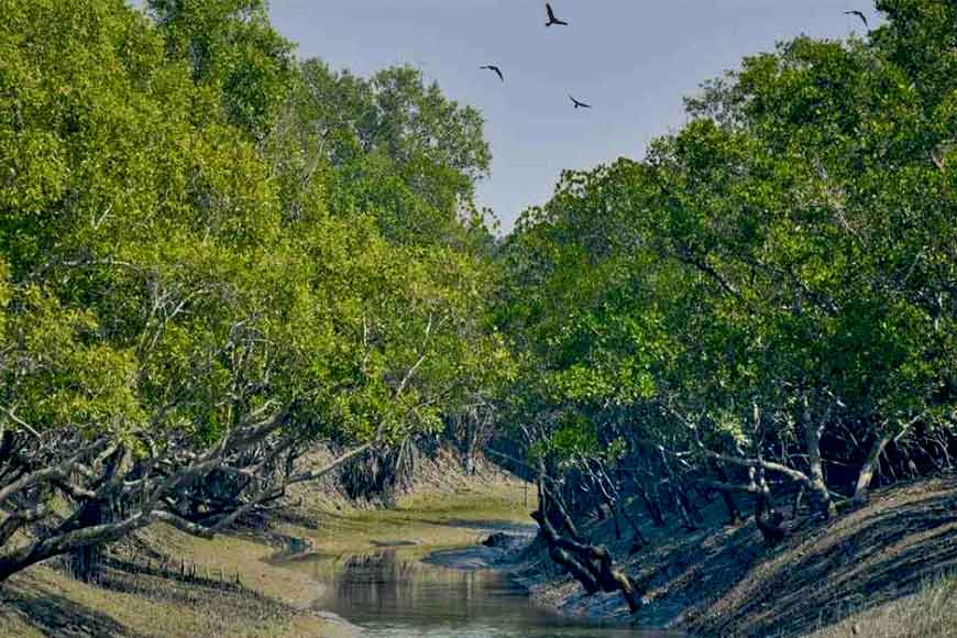 Three students from Bengal help in Mangrove Conservation in a unique way