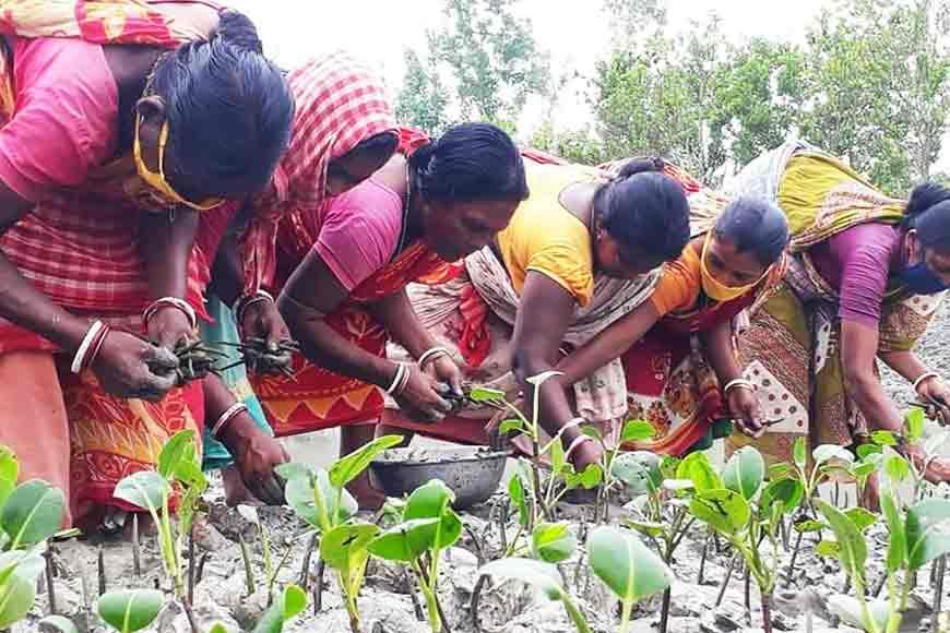 West Bengal Government executes massive Mangrove Plantation in Sundarbans