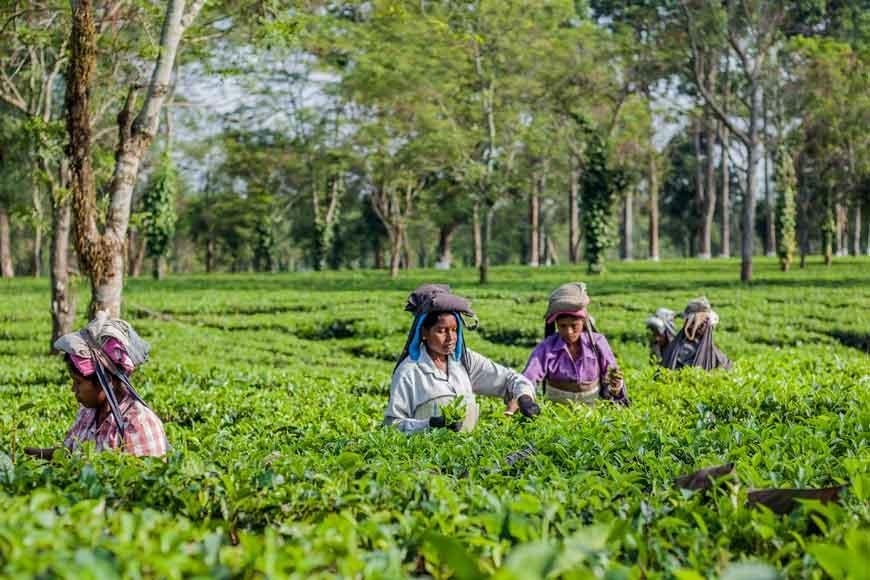 Jalpaiguri's Maxima Toppo uses street plays to create Corona awareness for tea garden workers