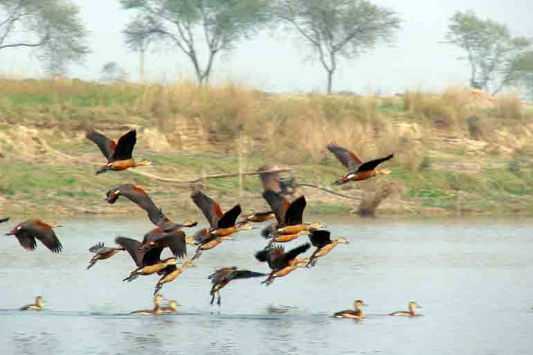Migratory birds are flocking to Narja and not Santragachhi