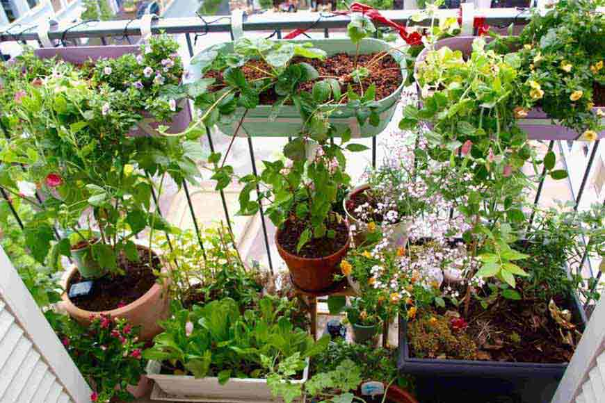 Bring 'Nature' within your home and conserve it in your way