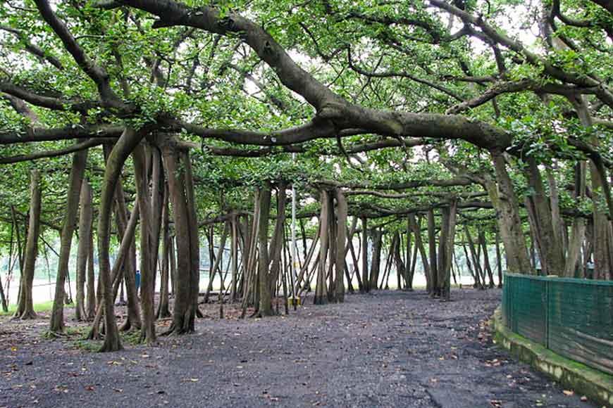 270-year-old Great Banyan Tree of Botanical Gardens ravaged by Amfaan