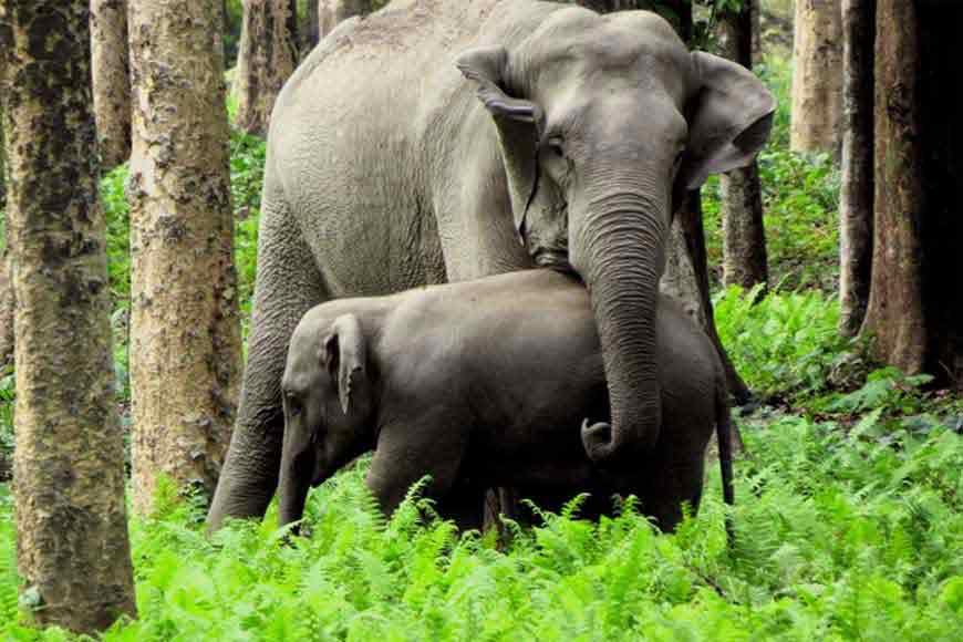 We don't kill elephants! Bengal uses innovative elephant management system