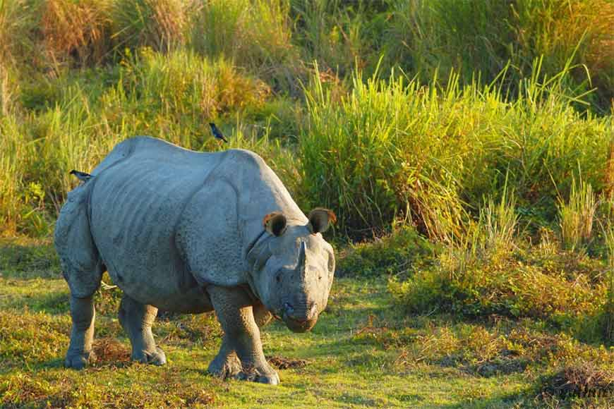 West Bengal has successfully increased Rhino population in the wild