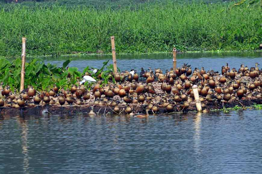 Famous Santragachhi Lake being revamped to draw more migratory birds this year!