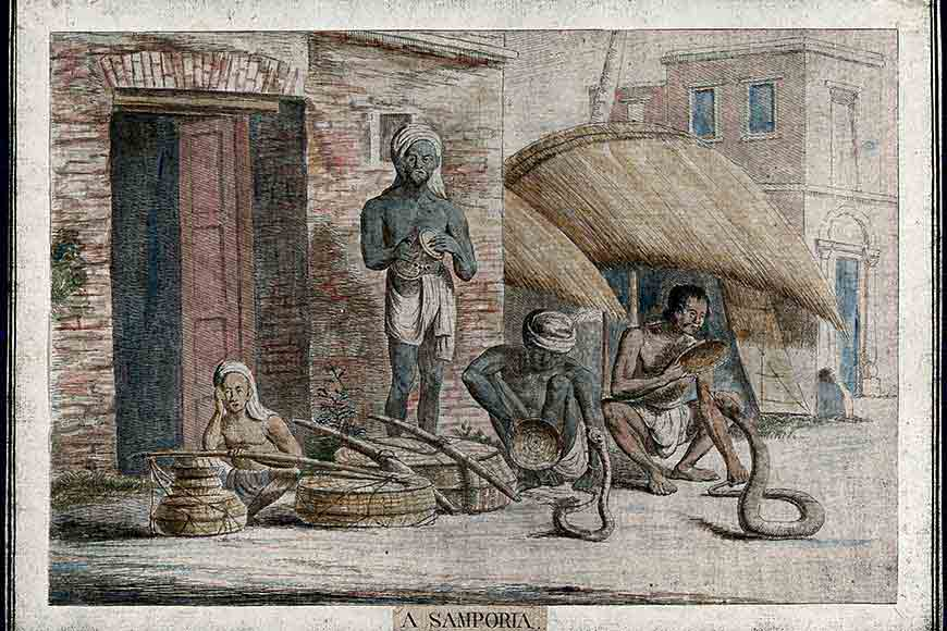 Where have all the snake charmers of Bengal gone? Do you hear their flutes anymore?
