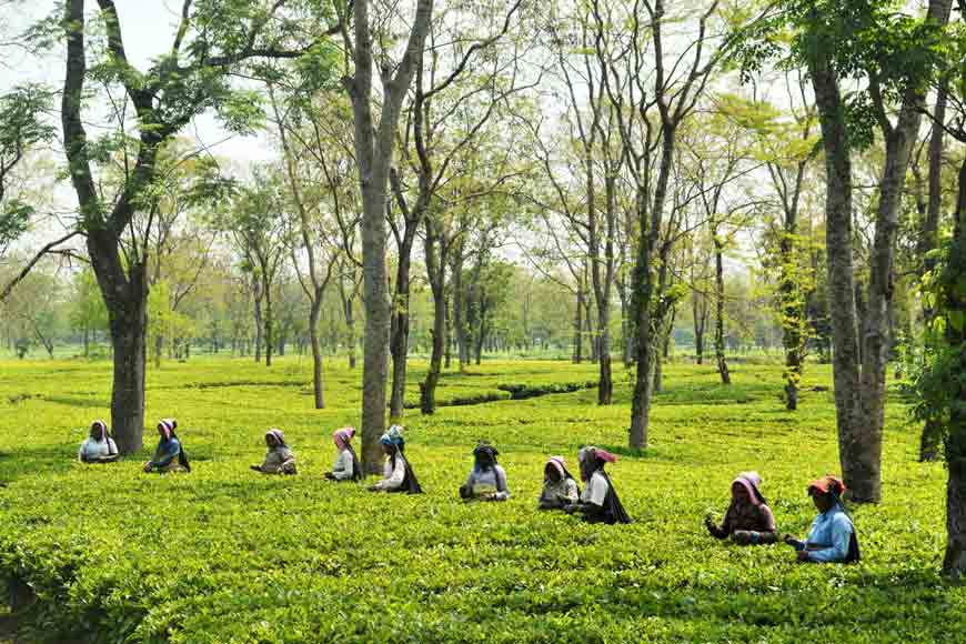 Bengal's Tea Tourism gets a big revenue boost: State Government eases land use norms