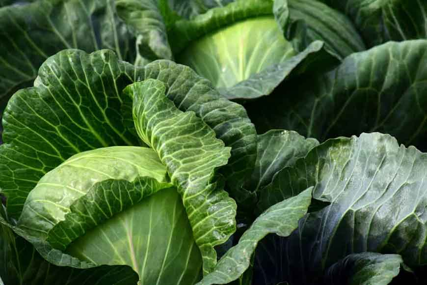 Murshidabad sets record in cabbage production this winter