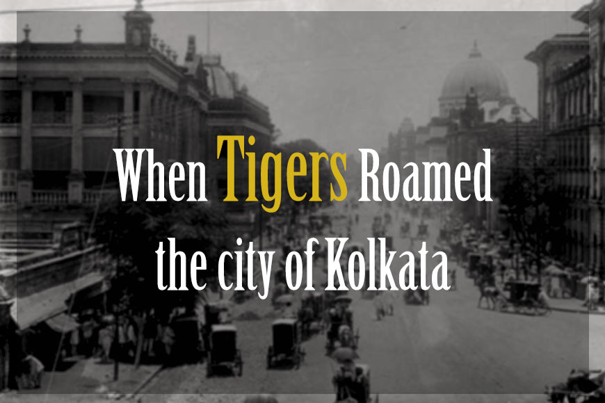 When tigers roamed the streets of Kolkata