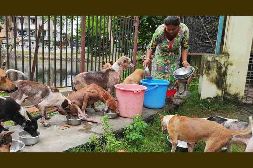 On World Animal Day, a Kolkata hospital is asking for your help