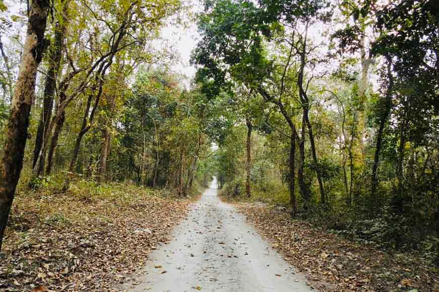 On International Day of Forests, here's looking at Baikunthapur and its treasures