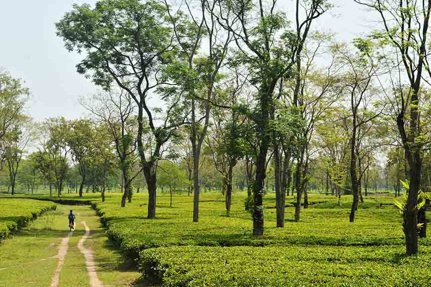 Tea tourism, a growing industry in itself