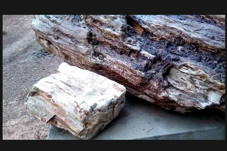 Rare plant fossils discovered in Ilambazar