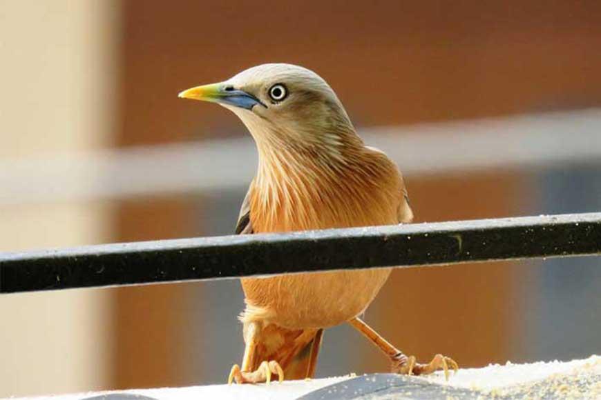 The winged wonders of Kolkata