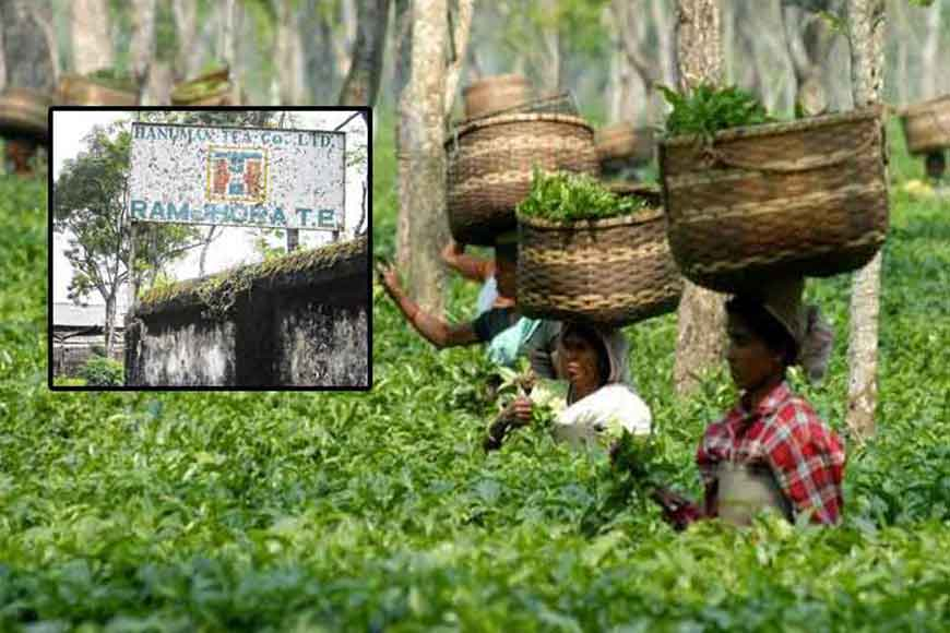 Tea gardens reopen, bring hope