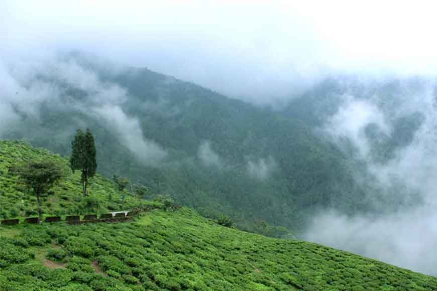 This winter be at second oldest tea estate and highest tea factory of the world!