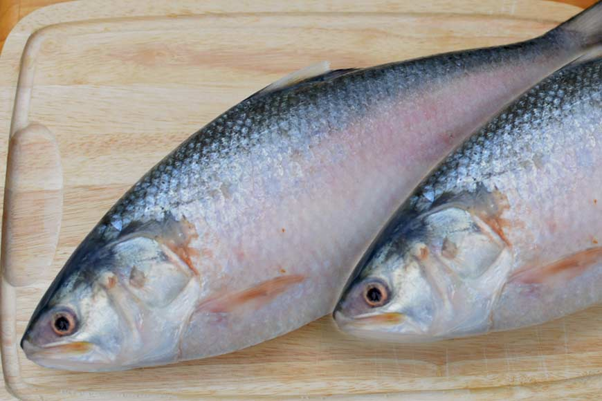 Hilsa oil's Omega 3 fatty acids help reduce COVID impact! International Journal report