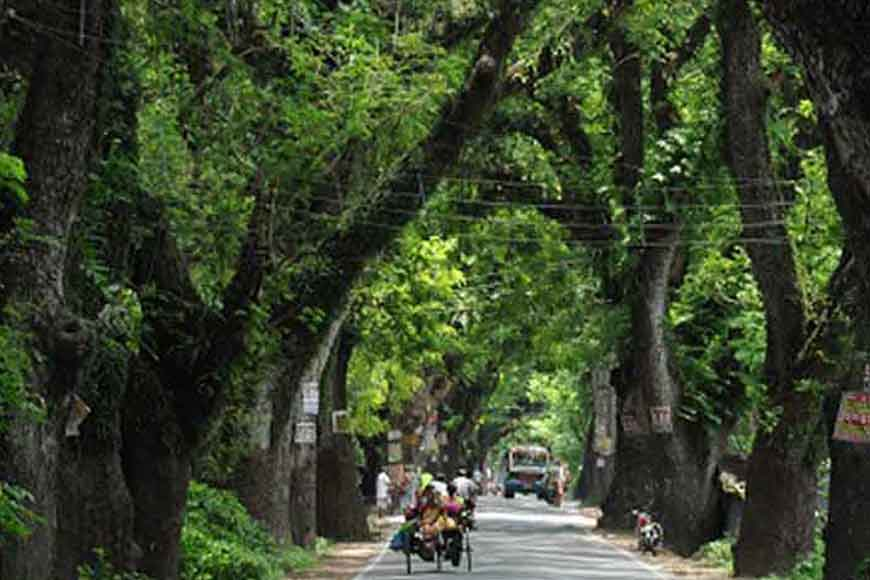 Demand for heritage status for trees along Jessore Road