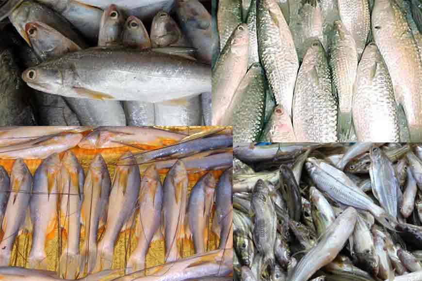 Why is Bengal losing its indigenous fish varieties?