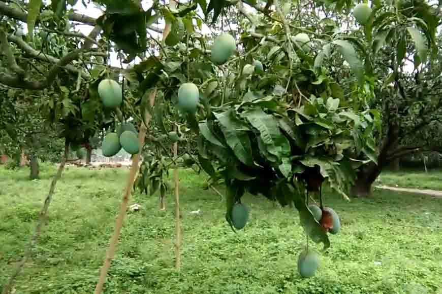 Take Bengal's Mango Tourism trail to see how much you don't know