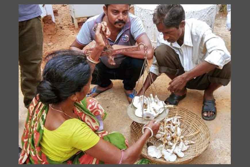 Mushroom of Bishnupur that costs more than mutton