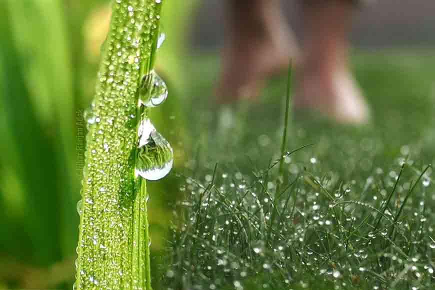 walk on dewy grass? Where to head to in Kolkata?
