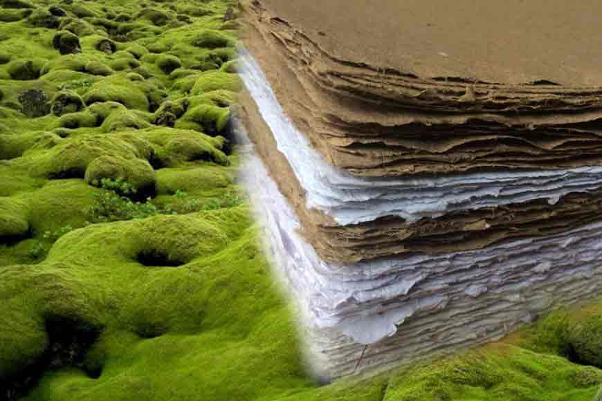 EUREKA! Paper from Field Moss! Scientists of Burdwan University work wonders