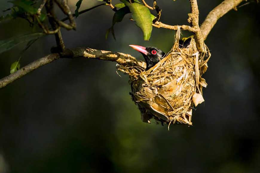 Artificial nests set on trees in Howrah to help nestling birds post cyclone