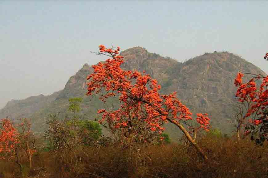 Wish to visit a Palash bon? Travel to Bankura