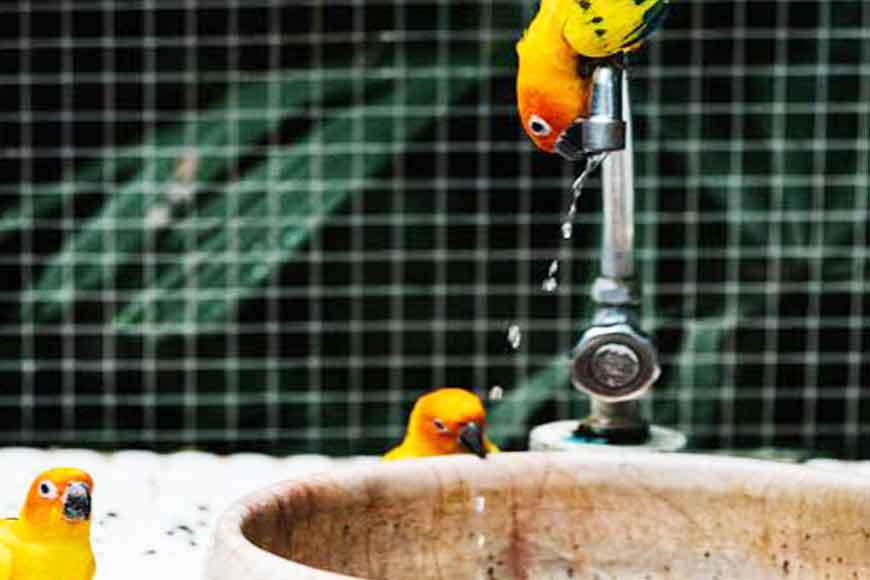 Take care of pet birds this scorching summer