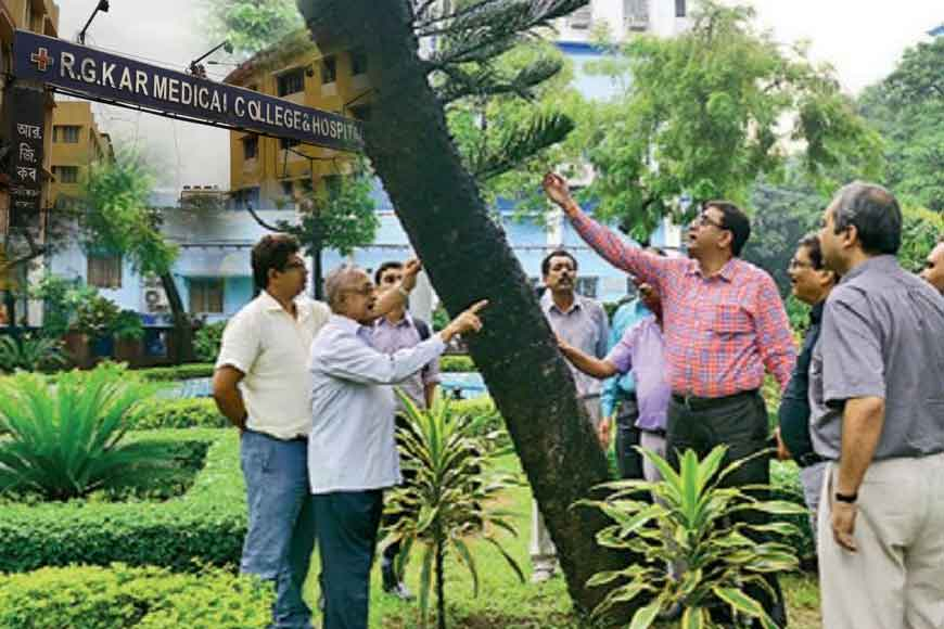 91-year-old X-mas tree to be rescued r.g.kar hospital
