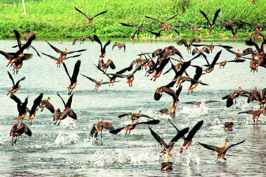 Birder's Paradise, Coochbehar's Rashikbil is a haven for feathered friends