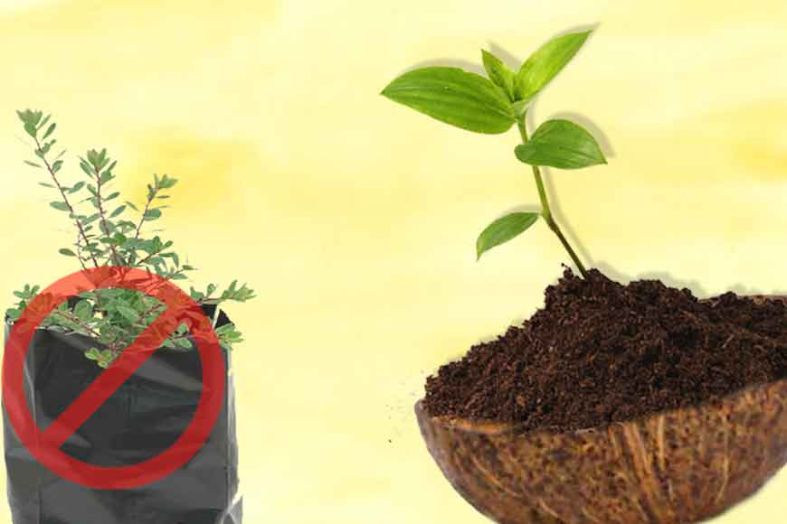 No saplings in polythene bags! Use coconut shells instead