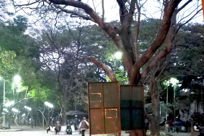 Six Shirish trees to be chopped down in Kolkata's Rabindra Sarobar