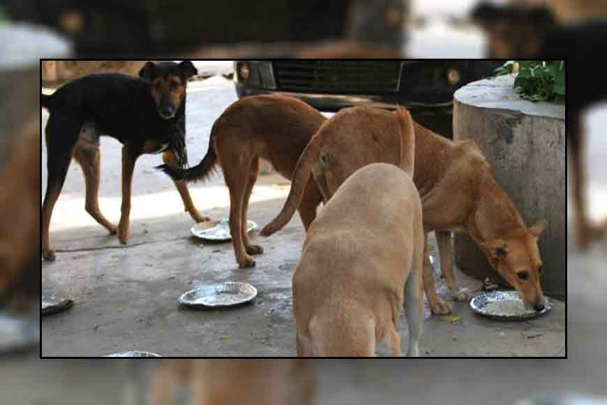 Rs 3 lakh bank loan to feed stray dogs! Meet Kalyani's Nilanjana Biswas who feeds meat and rice to 400 dogs daily