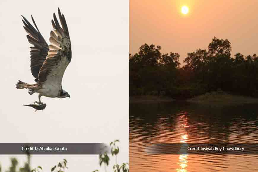 SUNDERBAN DIARIES - Dead bodies on bhela and bird hunters