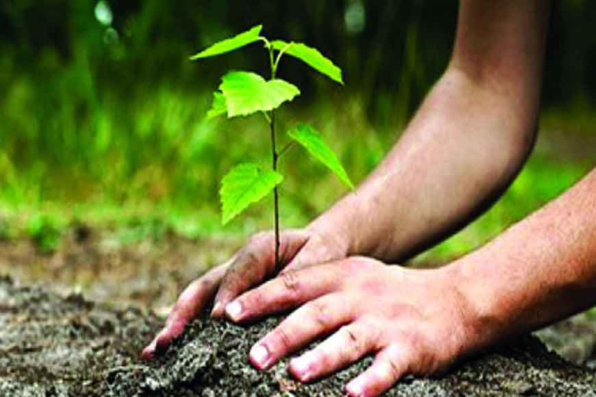 Calcuttans can now adopt a tree and save Lake Greens