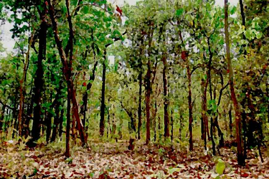 HIDCO brings new Urban Forest with hundreds of trees to Kolkata